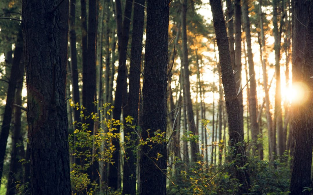Forests Flourish with More Trees Now Than Three Decades Ago